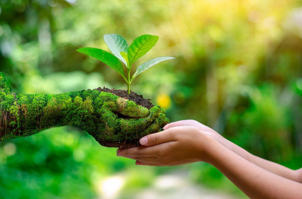 Deux mains vertes sur la gauche donnent une petite plante verte à deux autres mains à droite de l'image