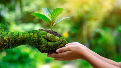 Des mains vertes tendent une petite pousse de plante à d'autres mains.